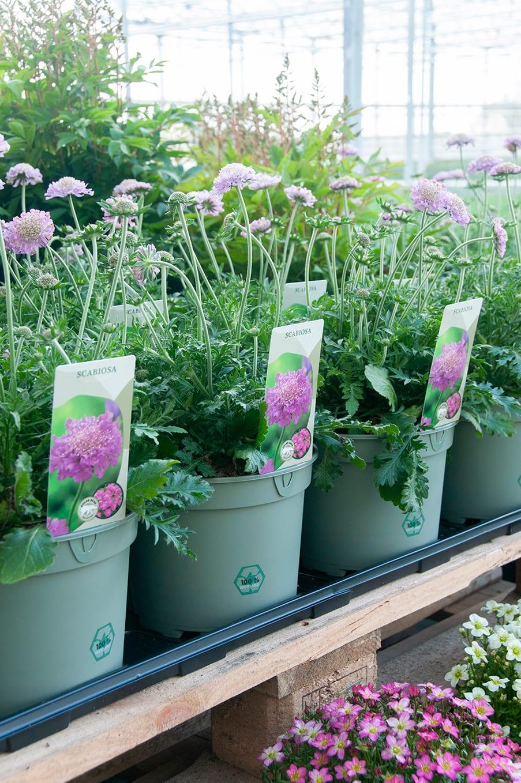 Van Woudenberg Tuinplanten - label